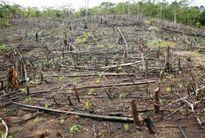 Không giảm thuế tài nguyên với gỗ rừng: Để tránh nạn chặt phá rừng