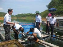 Áp dụng tiến bộ kỹ thuật nâng cao chất lượng cá nheo thương phẩm