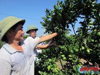 Quy định Bộ tiêu chí xây dựng vườn mẫu NTM trên địa bàn Hà Tĩnh