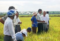 """""""Đầu tư hạ tầng sản xuất để tăng thu nhập cho nông dân"""""""