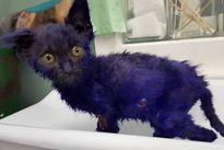 """Xót xa chú mèo con bị biến thành """"xì trum"""" để làm mồi sống cho chó"""