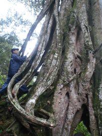 Chuyện cúng bái thú vị trong khu rừng không ai dám vào ở Hà Giang