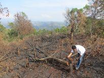 Để mặc dân phá rừng