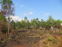 Gia Lai: Gần 300 người kéo nhau vào đốn hạ rừng có chủ