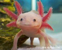 6 loài vật bạn chưa từng thấy bao giờ và có thể sẽ không còn cơ hội nữa