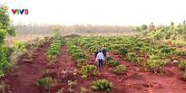 Vụ chặt phá rừng ở Gia Lai: Có dấu hiệu buông lỏng quản lý