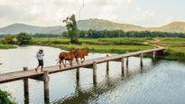 Hãy đến những nơi này để thấy Phú Yên còn đẹp hơn những gì bạn thấy trong 'hoa vàng cỏ xanh'