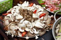 Điều phải biết khi sử dụng nấm ăn lẩu để không hại sức khỏe