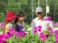 Nhộn nhịp thị trường hoa lan
