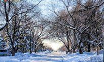 Mùa Đông, Canada đẹp như tranh vẽ bởi tuyết trắng