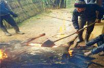 Thanh Hóa: 127 con trâu, bò của bà con bị chết do trời quá rét