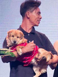 Sao Việt rớt nước mắt trước tình bạn giữa anh đánh giày và chú chó mù