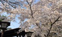 Sự thật thú vị ít ai biết về du lịch Nhật Bản