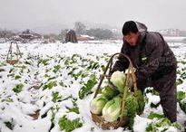 Giá rau củ, trái cây từ châu Á tăng vọt vì thời tiết quá lạnh