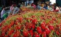 Xuất khẩu nông sản 2016: Mặt hàng trái cây có nhiều triển vọng