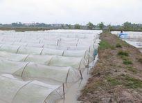 Bảo vệ cây trồng khi thời tiết rét đậm, rét hại