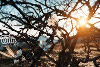 9x và bộ ảnh Mộc Châu đẹp mê hồn khiến bạn 'quên cả lối về'