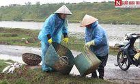 Thái Bình: Nhói lòng người dân 'khóc vược, than song'