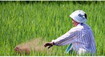 Tại sao nông dân Nhật có quyền lực chi phối cả chính trường?