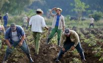 Ngành nông nghiệp Cuba thiệt hại nặng vì thảm họa khí hậu El Nino