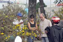 Đà Nẵng rộn ràng chợ hoa Xuân