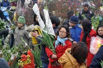 Hà Nội: Tổ chức chợ hoa xuân tại 47 địa điểm trên toàn Thành phố