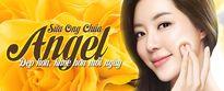 Sữa ong chúa tươi Angel tuyển đại lý phân phối