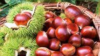 Hạt dẻ tăng cường sức khỏe cho người yếu thận