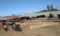 Xưởng gỗ bị đình chỉ vẫn ngang nhiên hoạt động