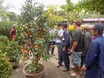 Nha Trang: Giá các loại hoa, cây cảnh tăng nhẹ