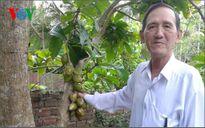 Một thương binh ở Tiền Giang vượt khó vươn lên làm giàu từ cây bưởi