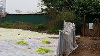 Kiểm soát an toàn vệ sinh thực phẩm dịp Tết: Đòi hỏi sự phối hợp liên ngành