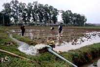Chủ động nguồn nước cho sản xuất vụ xuân
