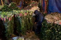 Rực rỡ sắc màu ở chợ hoa Tết lớn nhất Hà Nội