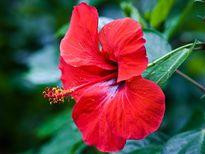 Những loại hoa cấm kỵ không nên cắm trên bàn thờ ngày Tết