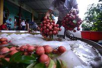 Hội nhập TPP: Thách thức về sở hữu trí tuệ với Việt Nam