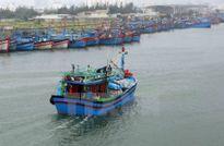 Ngư dân Cà Mau vui mừng vì trúng đậm chuyến biển đầu năm