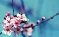 Thêm một mùa xuân đẹp