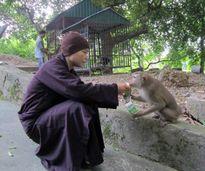 Cảm động chuyện sư cô yêu khỉ như con