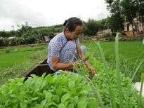 Tết Hạnh phúc: Vườn rau tết của má