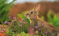 """Những động vật có thú """"chơi hoa"""" ngày Tết"""