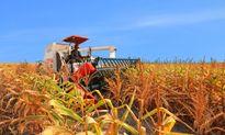 Ngành nông nghiệp hướng đến sự phát triển toàn diện, hiện đại hóa
