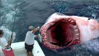 """Kỳ thú """"quái vật"""" dưới lòng đại dương"""
