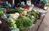 Giá thực phẩm rau xanh trở lại ổn định sau Tết