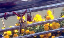 Ngày 14-2, khóa tình yêu xuất hiện trên cầu đi bộ Cần Thơ