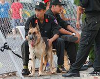 """Chó nghiệp vụ – nỗi ám ảnh của """"hooligan"""" Việt tại V-League"""