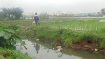 Nước thải Khu công nghiệp Phố Nối A đang giết dần giết mòn ruộng đồng