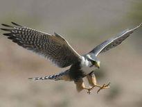 Top 10 loài động vật có tốc độ nhanh nhất trên Trái Đất