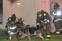 Chó béc-giê dẫn đường giúp cứu hai cháu bé kẹt trong lửa