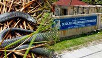 Hơn 700 người Malaysia bị rắn cắn vì nắng nóng bất thường